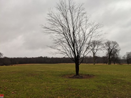 Waveny Park in Winter 2018