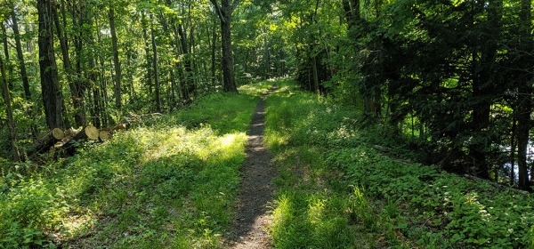 Single-Track Trail on Larkin State Park Trail