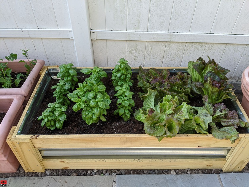 Garden Transformation sweet basil, red sails lettuce, bronze romaine lettuce